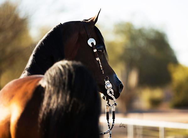 Gemini Acres Equine