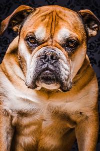 Hundefotografie Fotostudio Uster