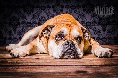 Hunde Bilder Rassen Fotos