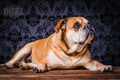 Hundebilder zum Ausdrucken