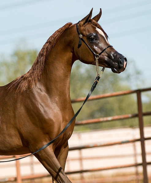 Ever After Filly - Lisa Markley
