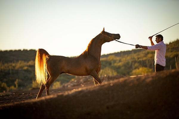 Signature Equine