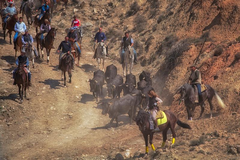 Transhumantzia Lehen Jardunaldia, mendiarte bidean (Arguedas, Nafarroa)<br /> Transhumance Festival  (Arguedas, Navarre)