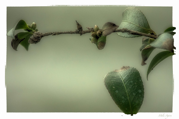 Leaves... the beauty of simplicity