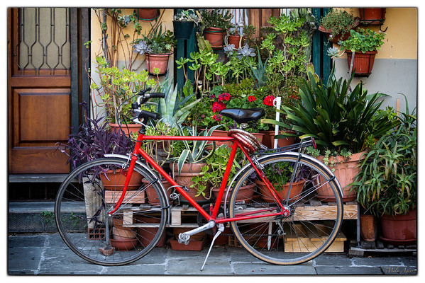 Ready to ride a bike? Lucca (Tuscany)