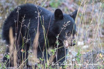 Lone bear cub