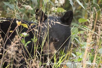Shy bear cub