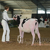 OntarioSpringHolstein16_L32A9694