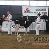 OntarioSpringHolstein16_L32A9690