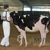OntarioSpringHolstein16_L32A9697
