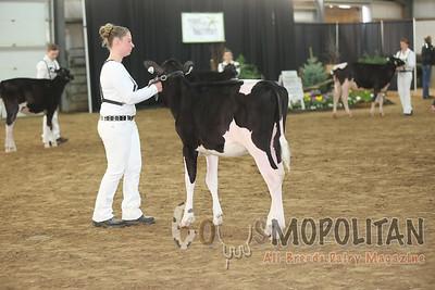 Ontario Spring Holstein Hfr 15