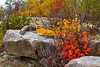 Fall foliage color in the rocks near Fort Frances, Ontario, Canada.