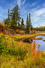 Fall foliage color in a marsh near Fort Frances, Ontario, Canada.