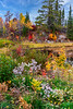 Autumn wildflowers with fall foliage color near Fort Frances, Ontario, Canada.