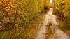 A small trail through the woods with fall foliage color near Atikokan, Ontario, Canada.