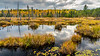 Fall foliage color in a marsh near Atikokan, Ontario, Canada.