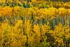 Fall foliage color along Highway 61 south of Thunder Bay Ontario, Canada.