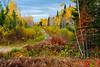 Fall foliage color near Nestor Falls, Ontario, Canada.