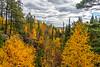 Fall foliage color near Quimet Canyon, Ontario, Canada.