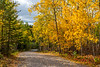 Fall foliage color in the trees at Rushing River Provincial Park, Ontario, Canada.
