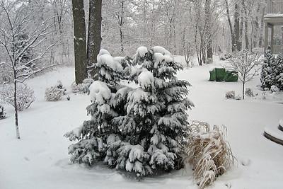 Backyard winter view