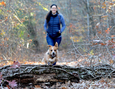 Tania Barricklo-Daily Freeman Vida, owned by Maria Vera of Woodstock, rear, jumps a log along the trail while going for a walk Monday afternoon at Onteora Lake State Park. The park is located off of Rt. 28 in theTown of Kingston.