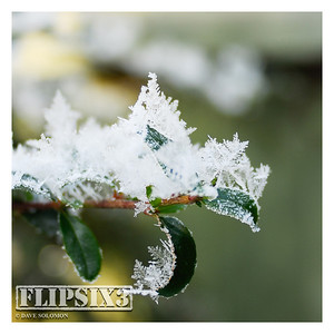 Frost, close-up