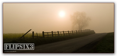 Part of the old Warwick Road, Kibworth.   This stretch - and the tree - are no longer there. Early morning, through the mist and into the sun