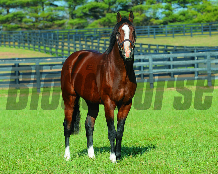 Union Rags stands for $35,000 at Lane's End in 2013<br /> Photo by Mathea Kelley