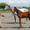 Laragh and her 2012 colt by Deep Impact; she is back in foal to Deep Impact for 2013<br /> Photo by Michele MacDonald