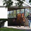 Lady Eli, in foal to War Front, with Amaris Chan at Hill 'n' Dale Farm near Lexington, Ky., where she is being prepped for the Keeneland November sale.  Sept. 28, 2018 Hill 'n' Dale in Lexington, Kentucky.