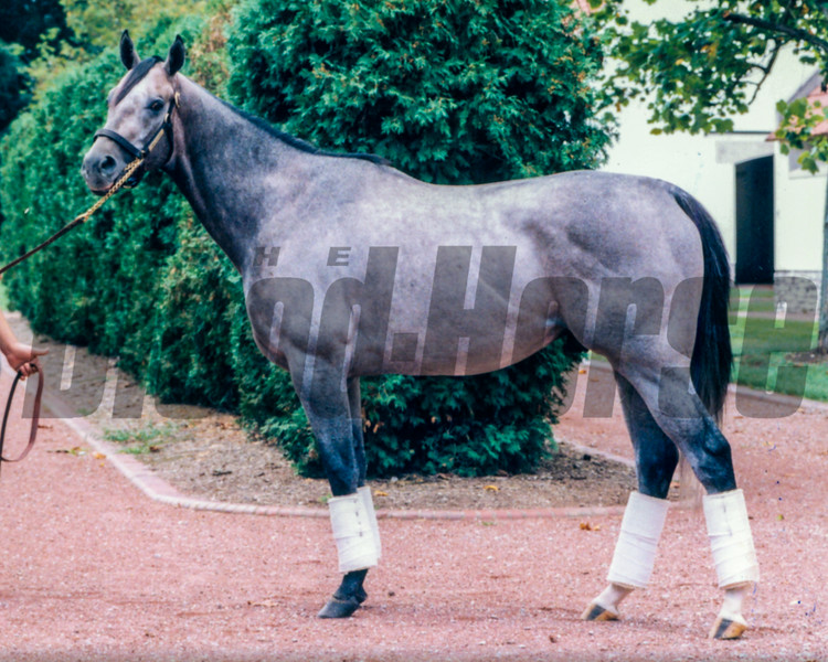 Smoke Glacken at Gainesway Farm, 1997<br /> Photo by: Anne M. Eberhardt