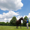 Delightful Quality, dam of Essential Quality, is in foal to Tapit at the James Lane division of Godolphin at Jonabell on June 15, 2021.