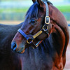 Caption: Blame with groom Kevin Lay at Claiborne Farm near Paris, Ky. on Nov. 20, 2010<br /> BlameFarm6  image883<br /> Photo by Anne M. Eberhardt