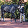 Tapwrit at Gainesway November 2018