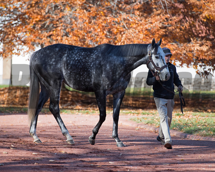 Tapwrit at Gainesway November 2018<br /> Keeneland November Sale 2018