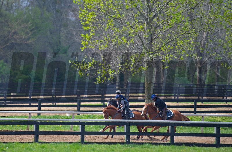Caption: (L-R) Chasingserendipity filly, Purrfect Love filly,  2018 Midshipman filly out of Showing Home <br /> Training at Silver Springs Training, part of Silver Springs Stud, near Lexington, Ky.,  on April 8, 2020 Silver Springs in Lexington, KY.