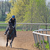 Caption: Quantitativbreezin filly galloping<br /> Training at Silver Springs Training, part of Silver Springs Stud, near Lexington, Ky.,  on April 8, 2020 Silver Springs in Lexington, KY.