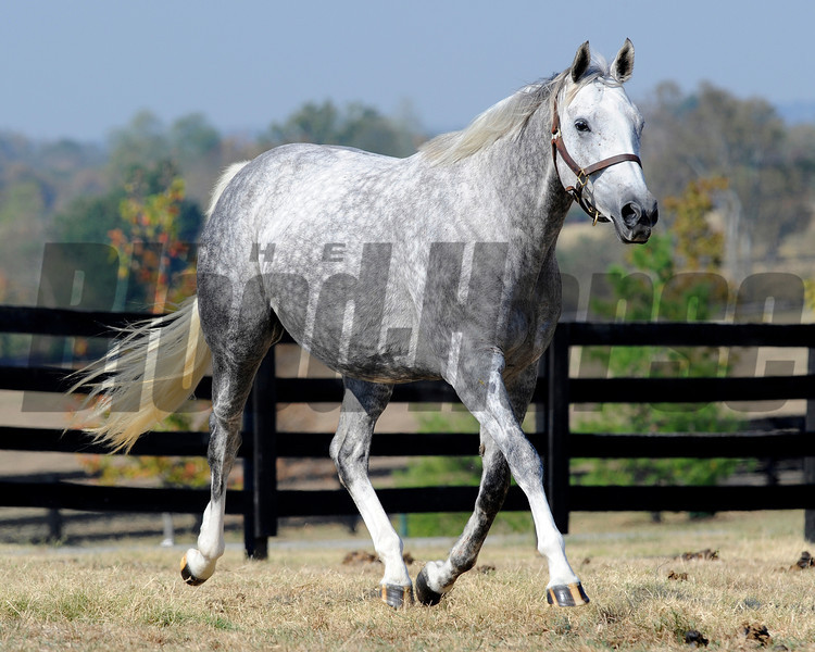 Caption: <br /> Octave in foal to Bernardini at Darley's Gainsborough near Versailles, Ky. on Sept. 20, 2010.<br /> BalanceOctave image166<br /> Photo by Anne M. Eberhardt