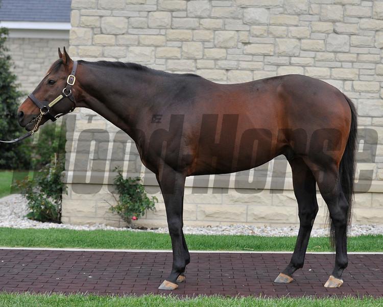 Adena Springs stallion Ghostzapper at the Paris, KY facility.