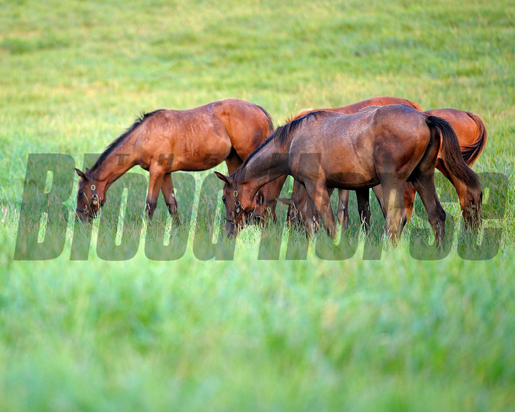 Caption: weanlings<br /> Horse scenes at a Central Kentucky farm on August 4, 2010.<br /> Origs1 image587<br /> Photo by Anne M. Eberhardt