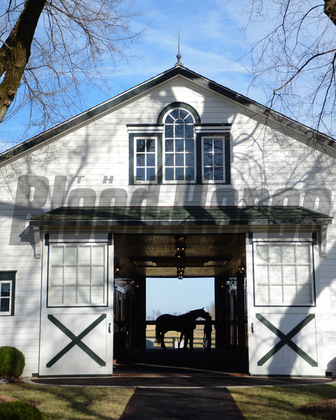 2014 Stallion Show at Spendthrift Farm<br /> photosbyz.com