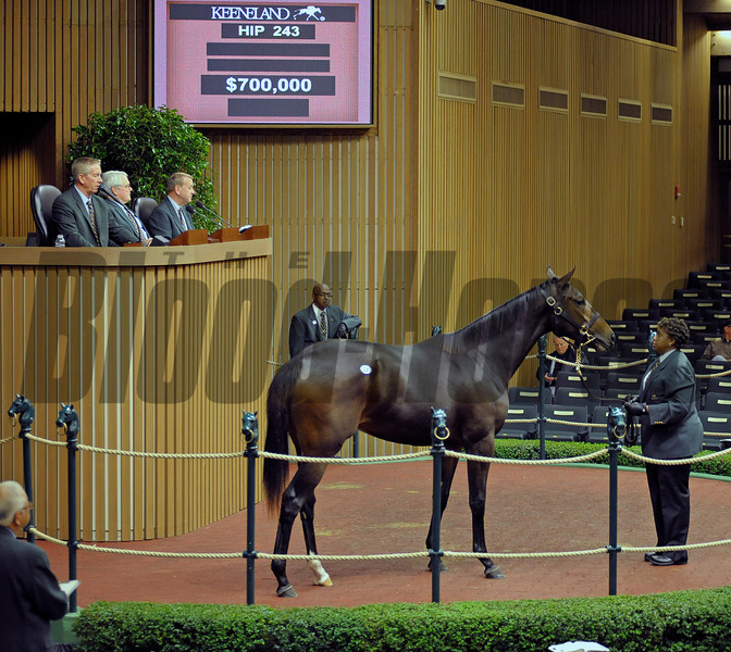 Hip 243 Samantha Nicole, a yearling full sister to Horse of the Year Rachel Alexandra, brings $700.000 from Barbara Banke, owner of Stonestreet Stables and home of Rachel Alexandra.<br /> Hip243 image 393