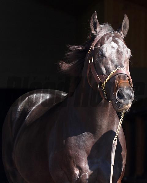 Take Charge Indy at Winstar Farm<br /> photosbyz.com