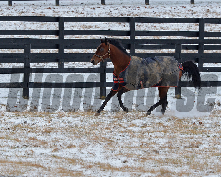 Battle of Midway at WinStar Farm in Versailles, Ky. on Jan. 13, 2018.