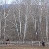 Cedar Brook