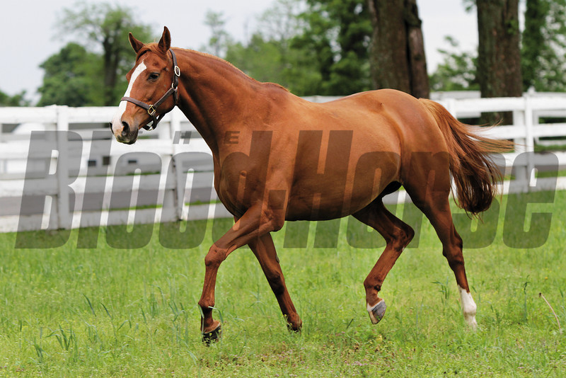 Oatsee, dam of 136th Preakness winner Shackleford, in the paddock at Darby Dan Farm in Lexington, KY on May 23, 2011.<br /> Photo by Crawford Ifland
