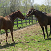 Groupie Doll and Brass Hat May 2013.<br /> Steve Haskin Photo