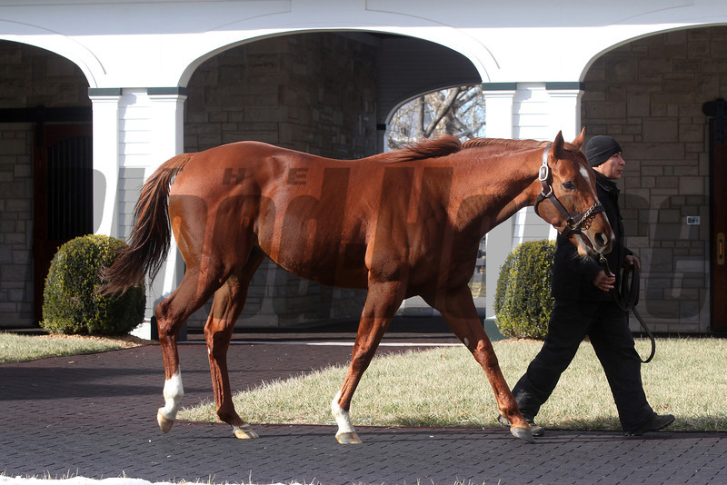 Jimmy Creed at Spendthrift Farm