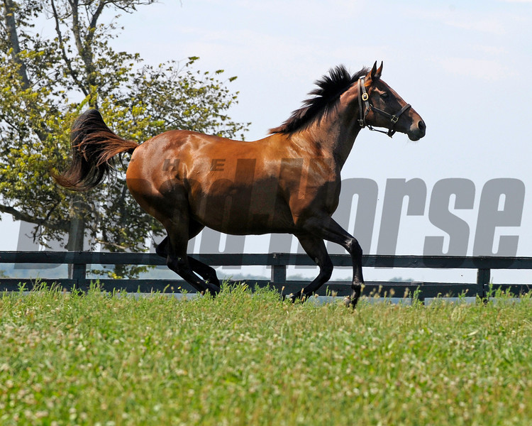Caption: running in paddock<br /> Pepper's Pride in foal to Distorted Humor at Taylor Made Farm near Nicholasville, Ky. on Sept. 2, 2010.<br /> PeppersPride image414<br /> Photo by Anne M. Eberhardt